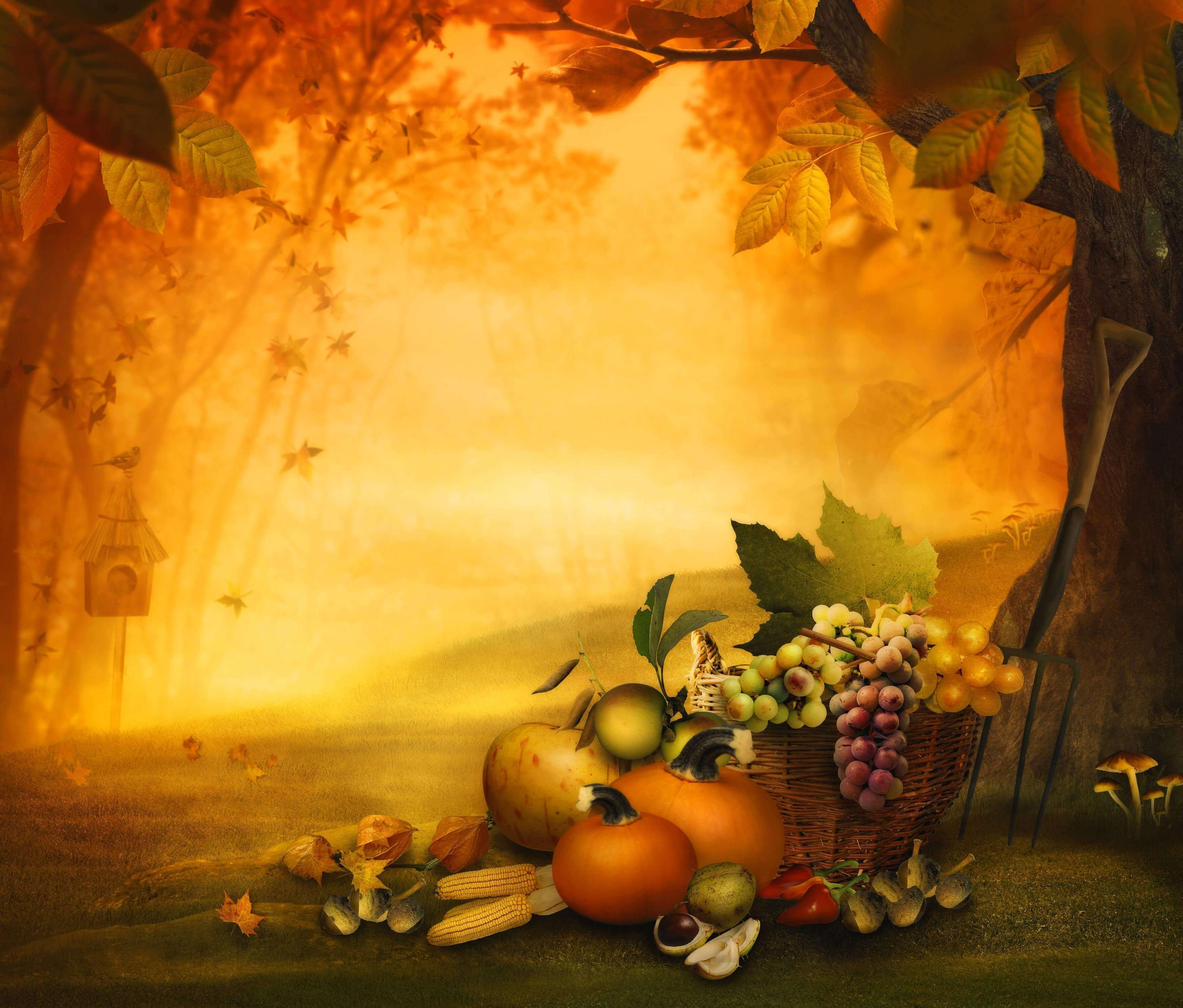 Thanksgiving Fall Backgrounds